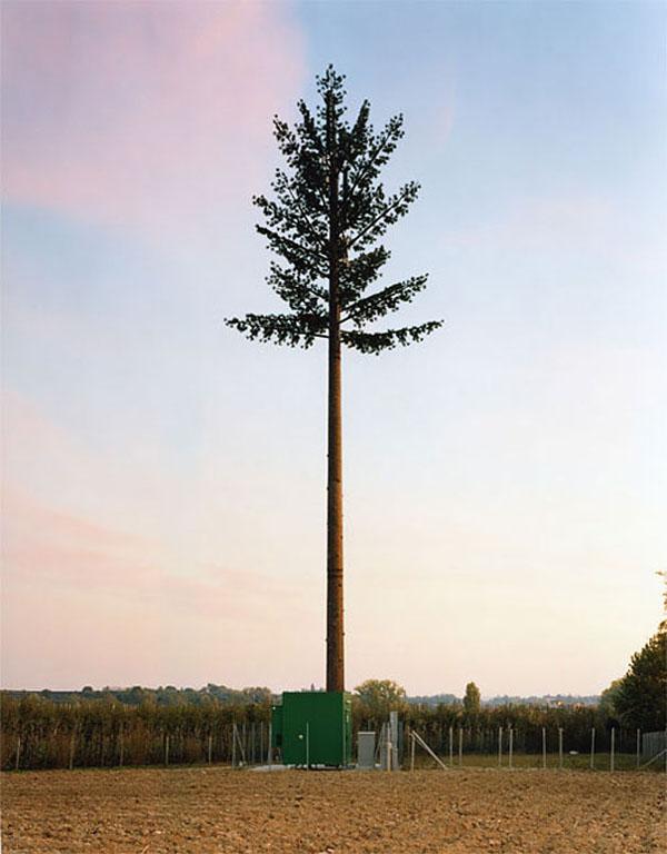 tree tower