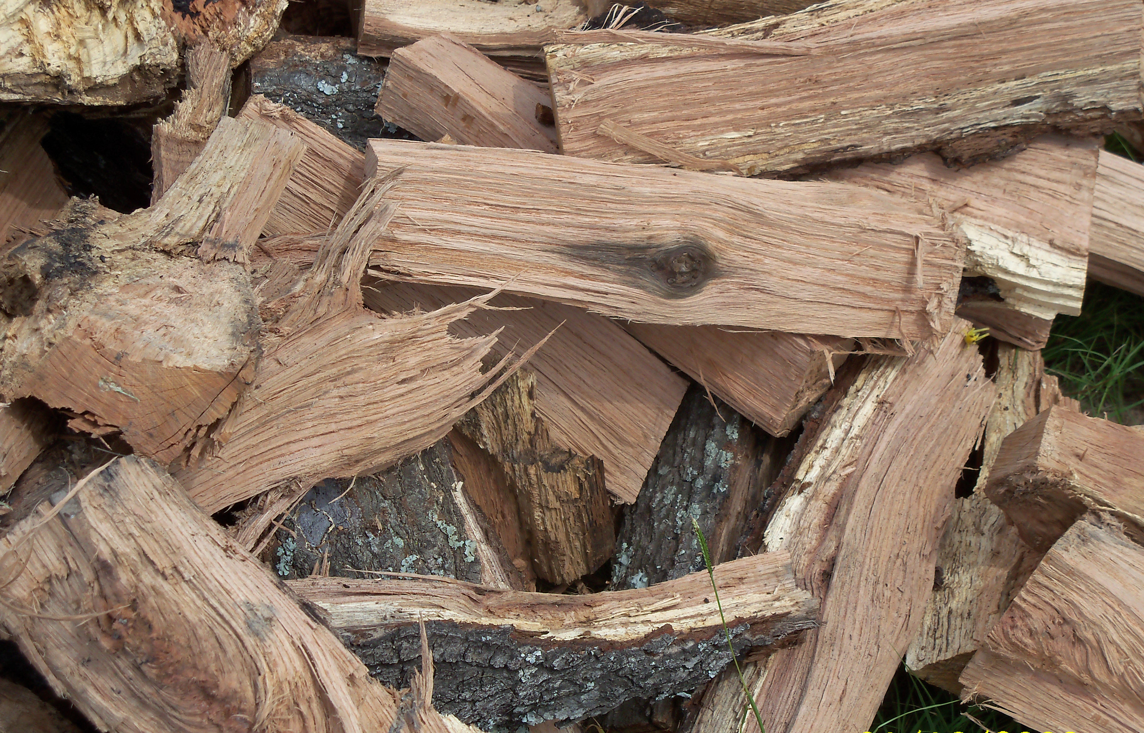Oak Wood Logs ~ A red oak day the squirrel s nest